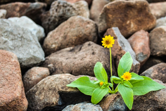 resilience in life